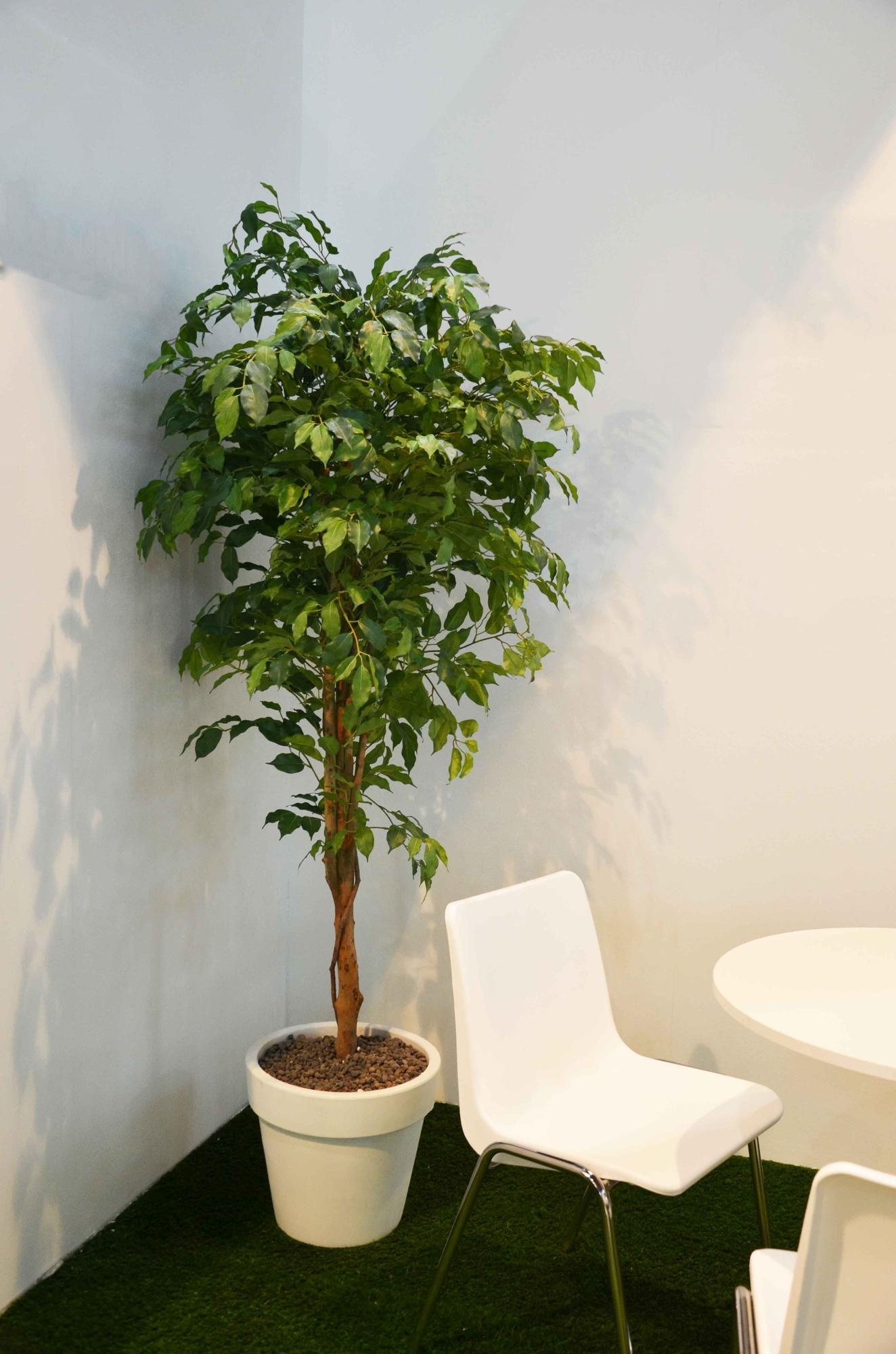 Ficus Benjamin   Piante artificiali da esterno/interno ...