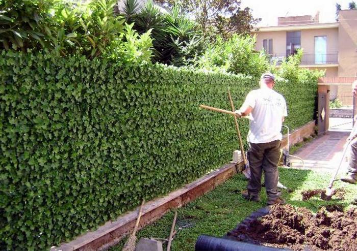 Siepi Da Giardino Prezzi : Siepi sintetiche da giardino prezzi siepi da giardino la potatura